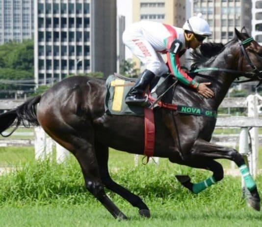 Renato Muoio apaixonado por cavalos e investidor do turfe explica como funcionam as provas no esporte.