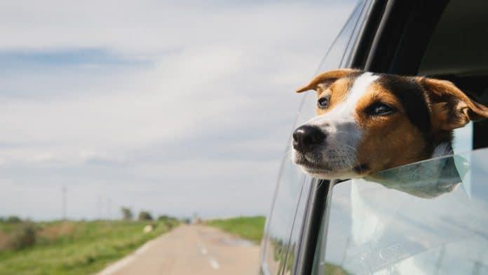 5 Cuidados com seu cachorro na viagem de carro