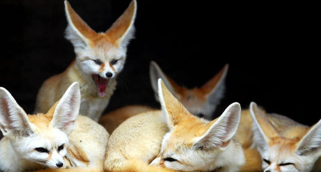 Super 8 animais exóticos que são permitidas como bichos de estimação XM15