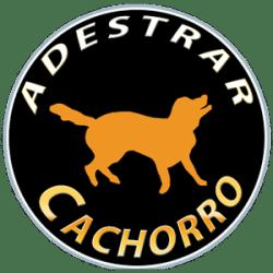 Adestrar Cachorro – Como educar seu cão