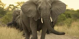 Conheça os oitos animais mais perigosos do mundo