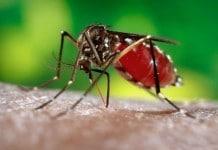 Conheça um pouco mais sobre a Zika Vírus