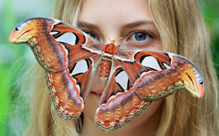 Mariposa-Atlas