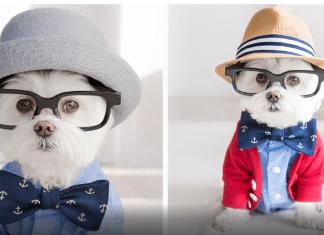 Ideias rentáveis de negócio com animais