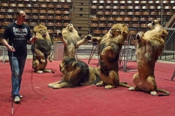 Treinadores de Leões