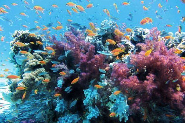 A Barreira de Corais de Belize