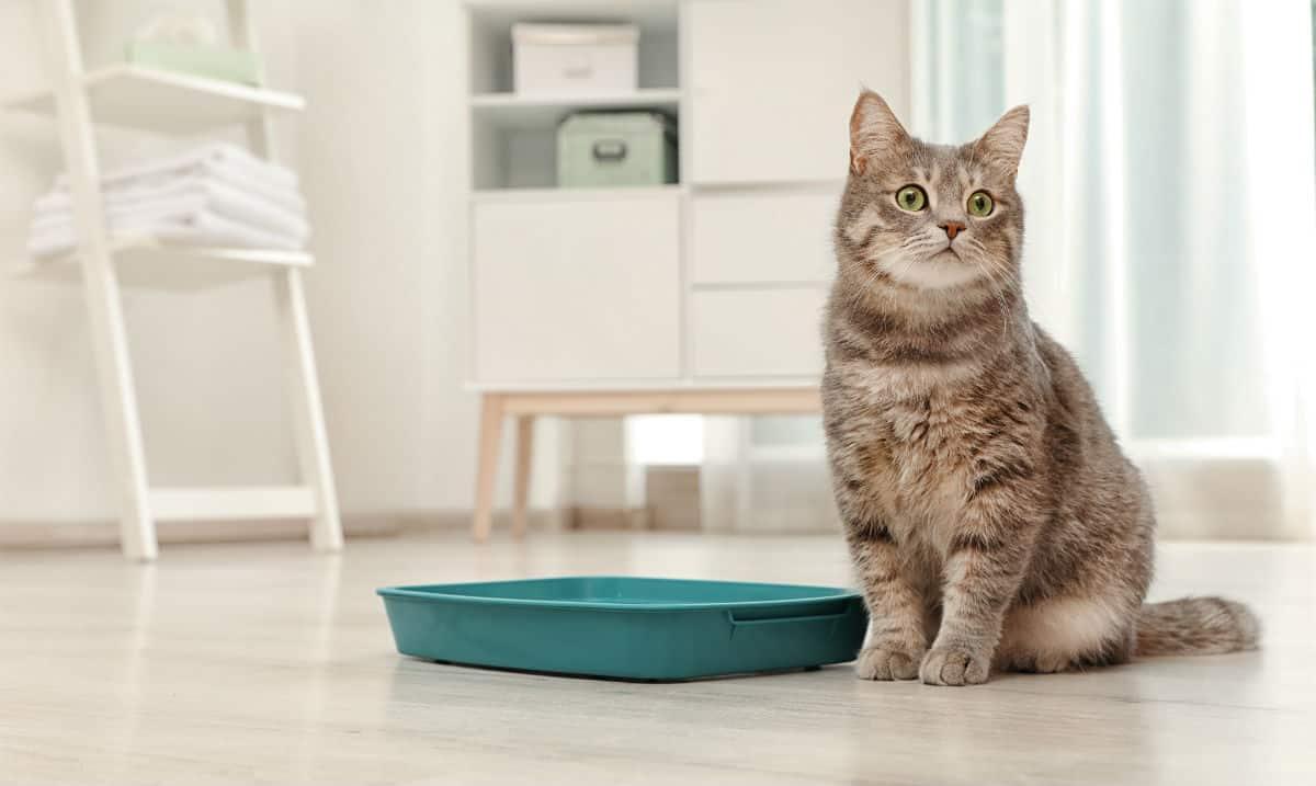Caixa de area e gato