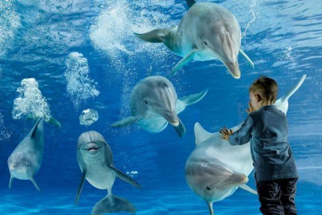 Dolphinarium Oltremare Riccione