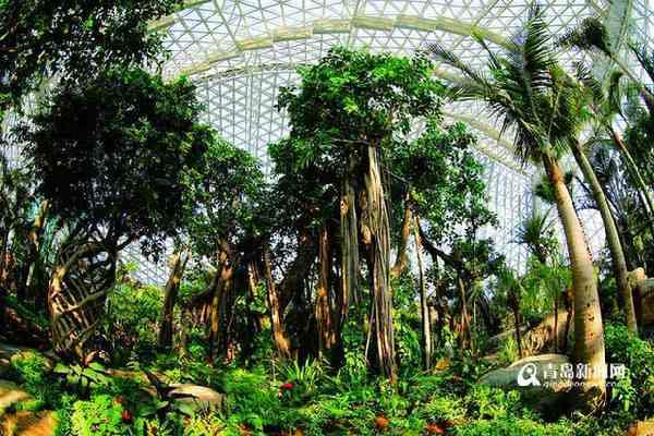 Jardim botânico Qingdao
