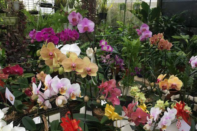 Jardim das Orquídeas 96