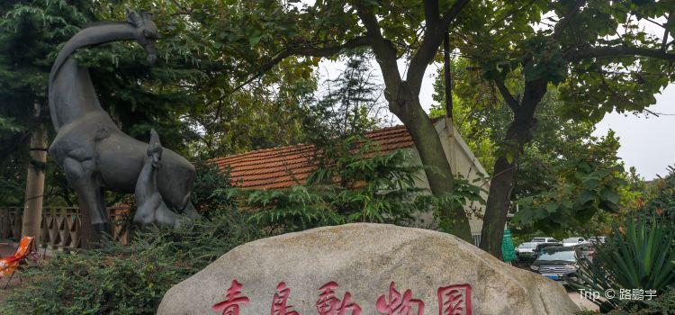 Jardim Zoológico de Qingdao