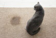 por que o gato anda fazendo xixi fora da caixa