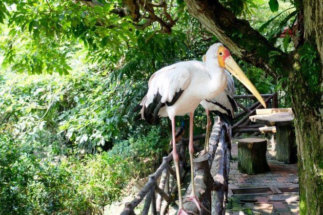 Parque de Aves de Kuala Lumpur