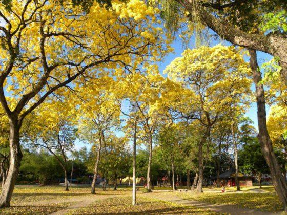 Praça das Mulheres no Parque Solon de Lucena - João Pessoa-PB