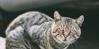 como a poluição urbana prejudica os pets