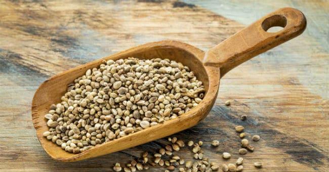semente de canhamo