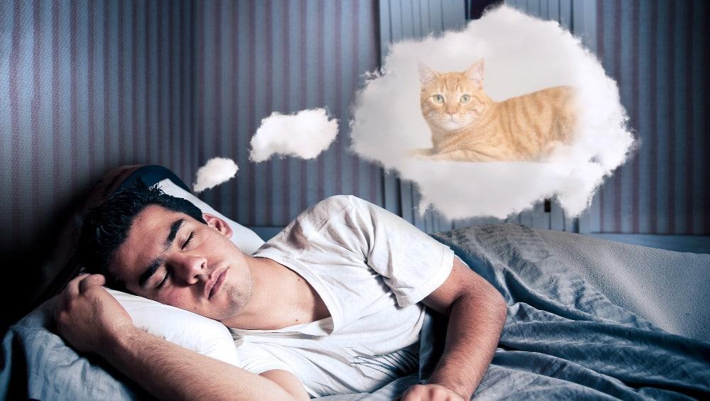 Sonhar com gato amarelo