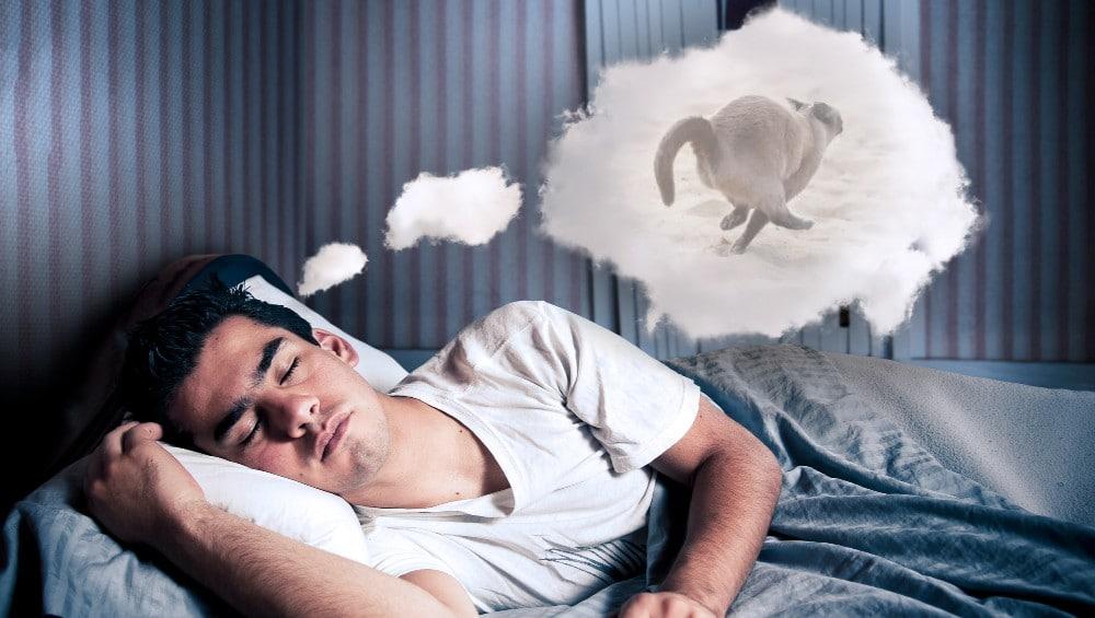 Sonhar com gato fugindo