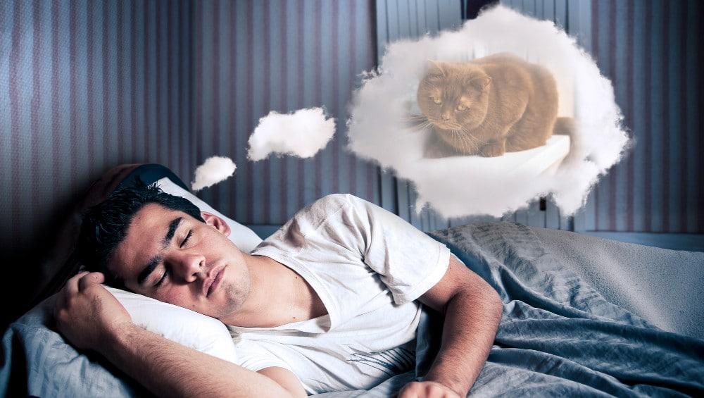 Sonhar com gato marrom