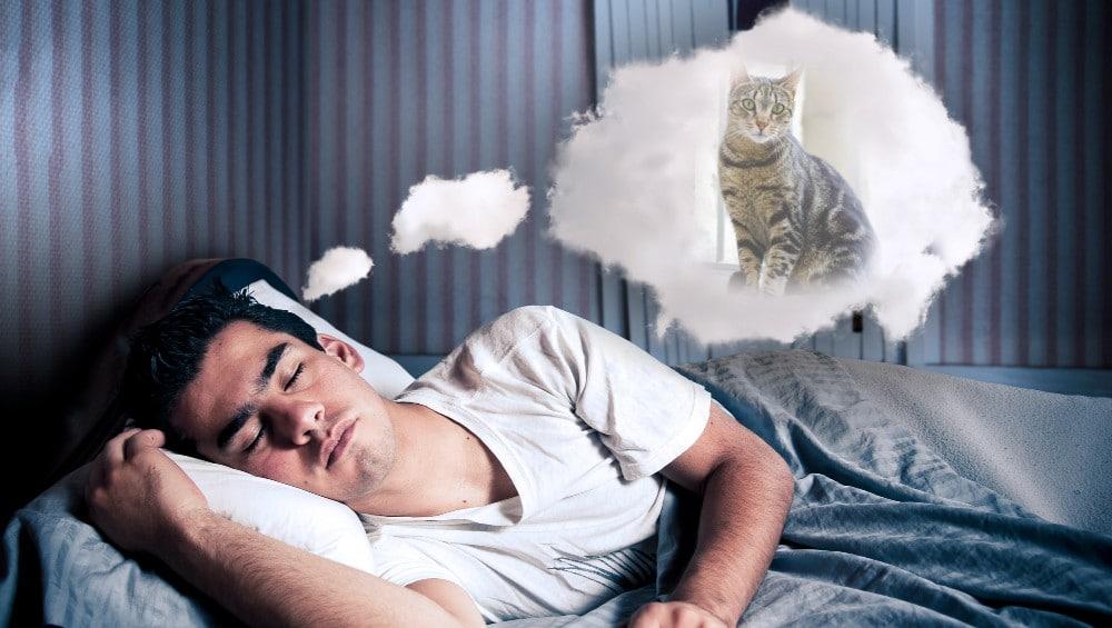 Sonhar com gato rajado