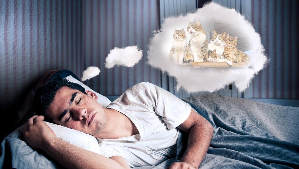 Sonhar com vários gatos